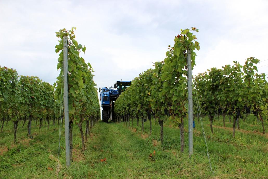 Weingut Wagenmann